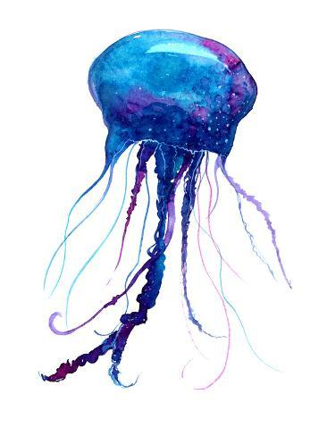jellyfish watercolor illustration posters by anna kutukova at