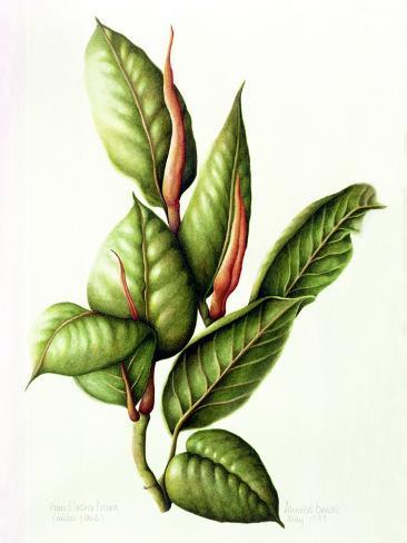 Rubber Plant, 1999 Giclée-vedos