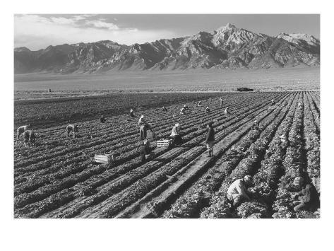 Farm, Farm Workers, Mt. Williamson in Background Impressão artística