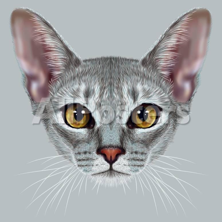 Abyssinian Cat Cute