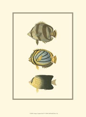Antique Tropical Fish IV Art Print