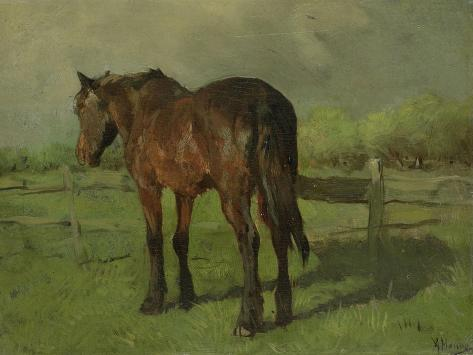 An Old Horse Standing in a Pasture with a Fence Premium Giclee Print