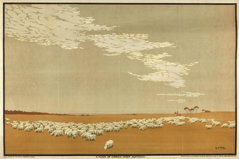 A Flock of Merino Sheep - Australia, from the Series 'Australia's Wealth of Wheat and Wool' Giclee Print