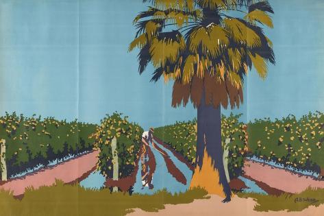 Irrigating Currant Vines - Australia Giclee Print