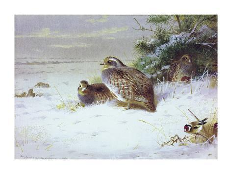 Partridges and Goldfinches in Winter Premium Giclee Print