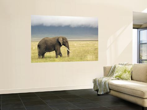 African Elephant (Loxodonta Africana) Wall Mural
