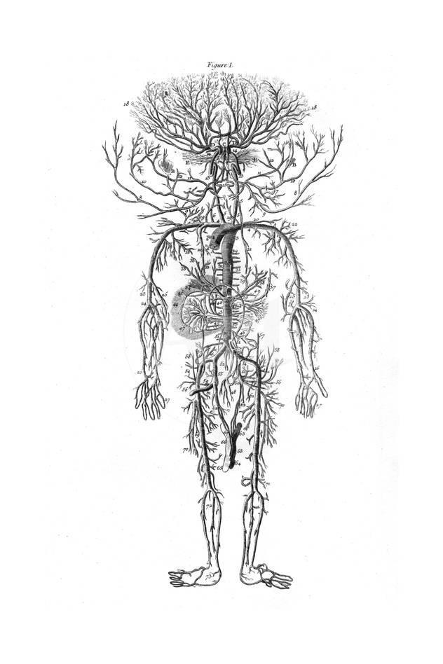 Arterial System Drake Giclee Print At Allposters