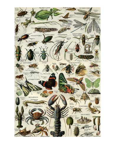 Arthropodes Art Print