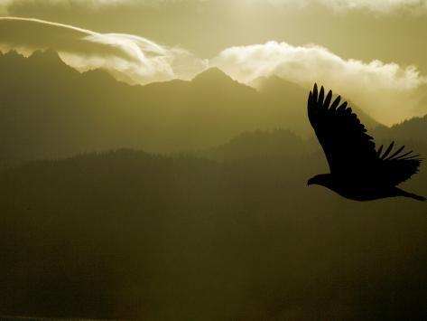 Silhouette of Bald Eagle Flying Against Mountains and Sky, Homer, Alaska, USA Photographic Print