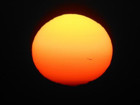 Silhouette of Bird Flying in Front of Sun Globe, Ft. Myers, Florida, USA Photographic Print