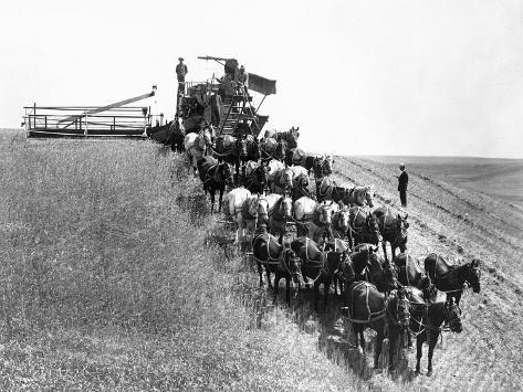 Horse-Drawn Team Wheat Farming Giclee Print