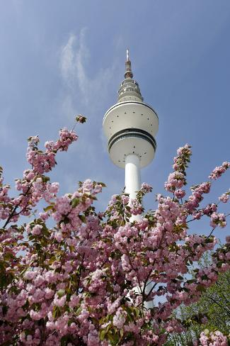 Cherry Blossoms and Television Tower, Hamburg, Germany, Europe Photographic Print