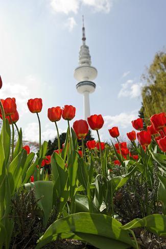 Television Tower, Heinrich Hertz Tower, Tulips, Botanical Garden, Planten Un Blomen Photographic Print