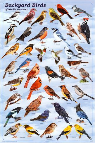 Backyard Birds Educational Science Chart Poster Poster