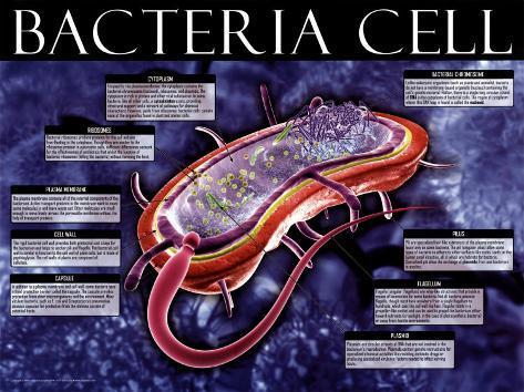 Bacteria Cell Art Print