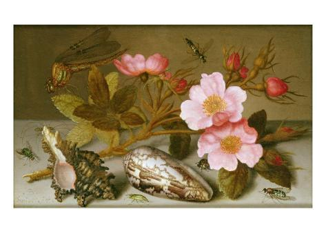 Still Life Depicting Flowers, Shells and a Dragonfly Lámina giclée