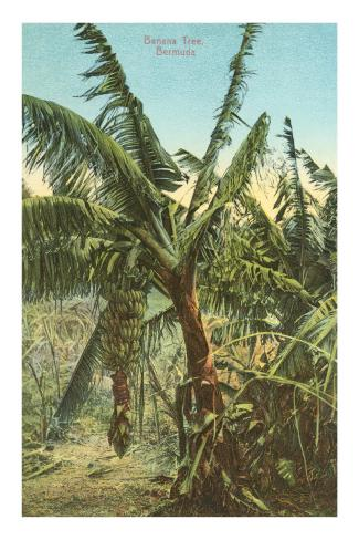 Banana Trees, Bermuda Masterprint