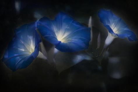 Blue Eyes Blue Stampa giclée