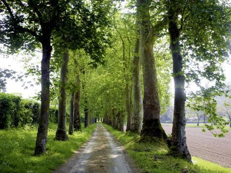 Avenue of Trees Leading Near Vitrac, Dordogne Valley Photographic Print
