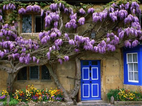 Cottage with Wisteria in Flower, Broadway, United Kingdom Photographic Print