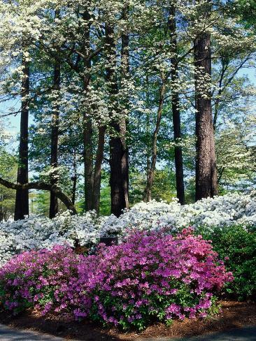 Norfolk Botanical Gardens, VA Photographic Print