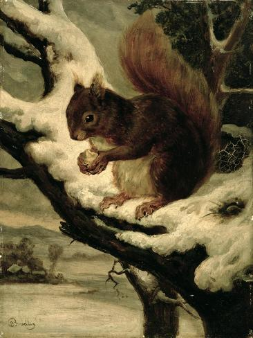 A Red Squirrel Eating a Nut Giclee Print
