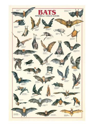 Bats Premium Giclee Print