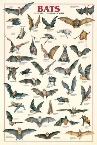 Bats Stretched Canvas Print