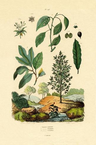 Bay Laurel, 1833-39 Stampa giclée
