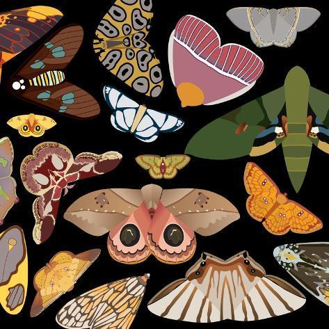 Moths Pachanga, Moths Mix Giclee Print