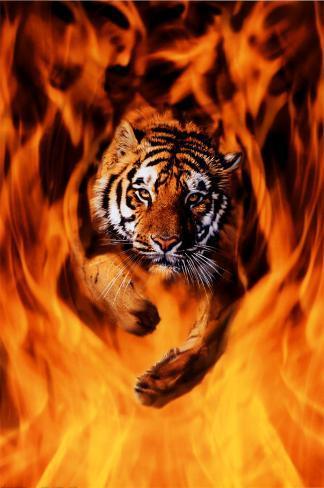 Bengal Tiger Jumping Flames Poster