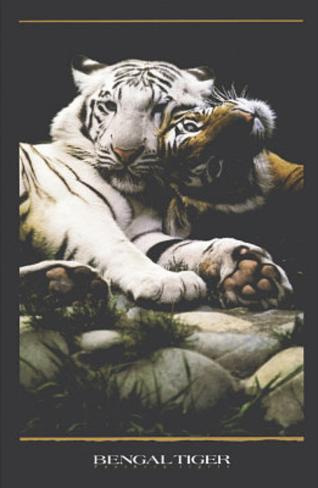 Bengal Tigers (White & Orange Tigers) Art Poster Print Poster