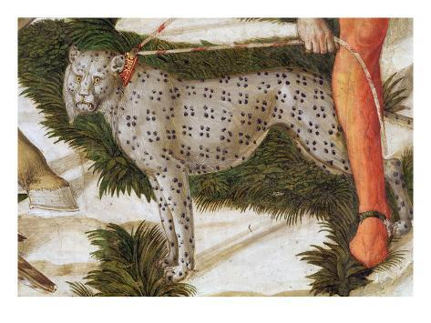 Leopard Straining on a Leash, Detail from the Journey of the Magi Cycle in the Chapel, C.1460 Giclee Print