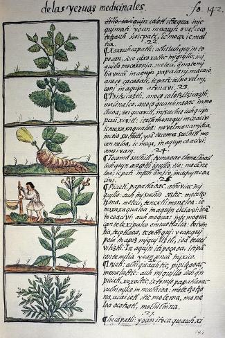 Hierbas y plantas medicinales l mina gicl e por bernardino for Hierbas y plantas medicinales