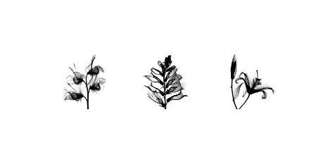 X-Ray Foxglove Triptych Giclee Print