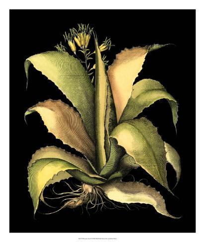 Dramatic Aloe II Giclee Print