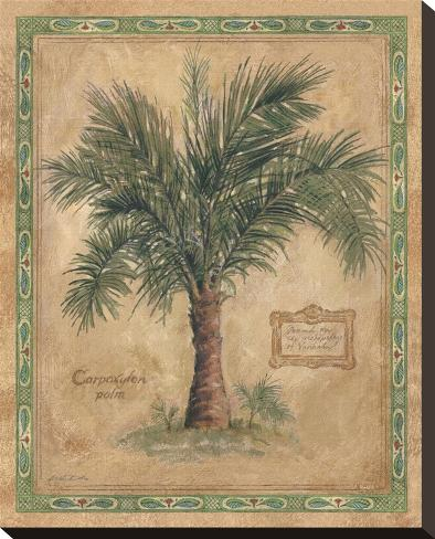 Palm Carpoxylon Stretched Canvas Print