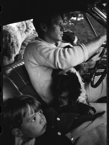 Senator Robert Kennedy Driving Car with Pet Springer Spaniel over His Lap and Son Max Beside Him Photographic Print