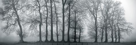 Silver Mists III Giclee Print