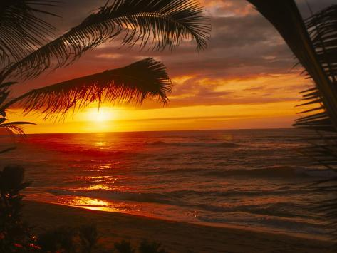 Sunset on the Ocean with Palm Trees, Oahu, HI Photographic Print