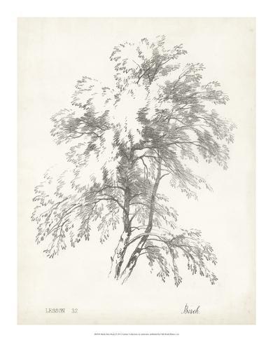 Birch Tree Study Giclee Print