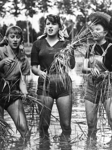 Bitter Rice, 1949 (Riso Amaro) Photographic Print