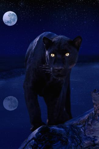 Black Panther in Moonlight Stretched Canvas Print