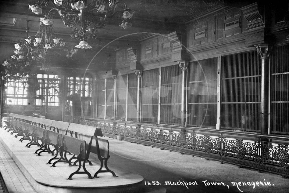 Blackpool Tower Zoo 1900 Photographic Print Allposters Com
