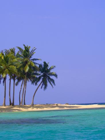 Palm Trees on Pelican Island Photographic Print