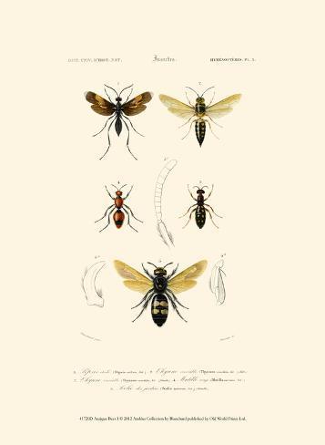 Antique Bees I Art Print