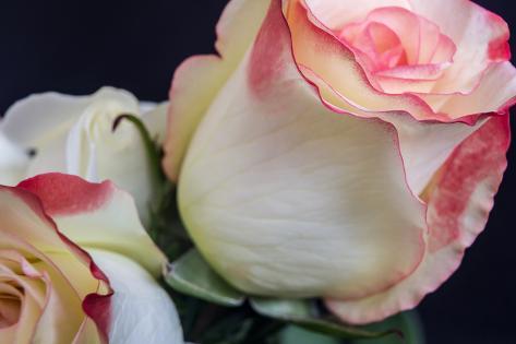 Soft Pink Stampa fotografica