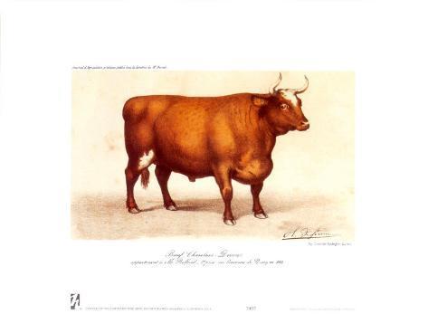 Boeuf-Charolais Art Print