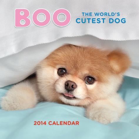 Boo The World's Cutest Dog - 2014 Calendar Calendars