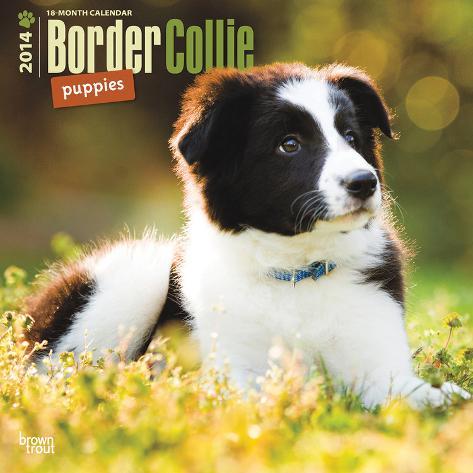 Border Collie Puppies - 2014 Calendar Calendars